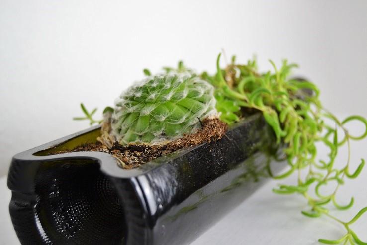 Liegende Weinflasche bepflanzt